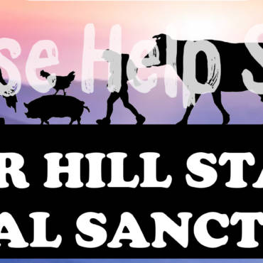 Vegan Runners to help Tower Hill Sanctuary